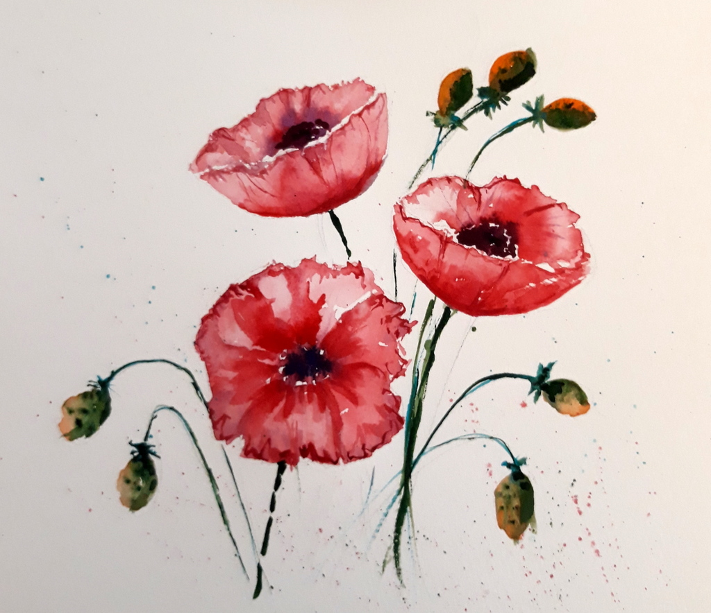 poppies-loose